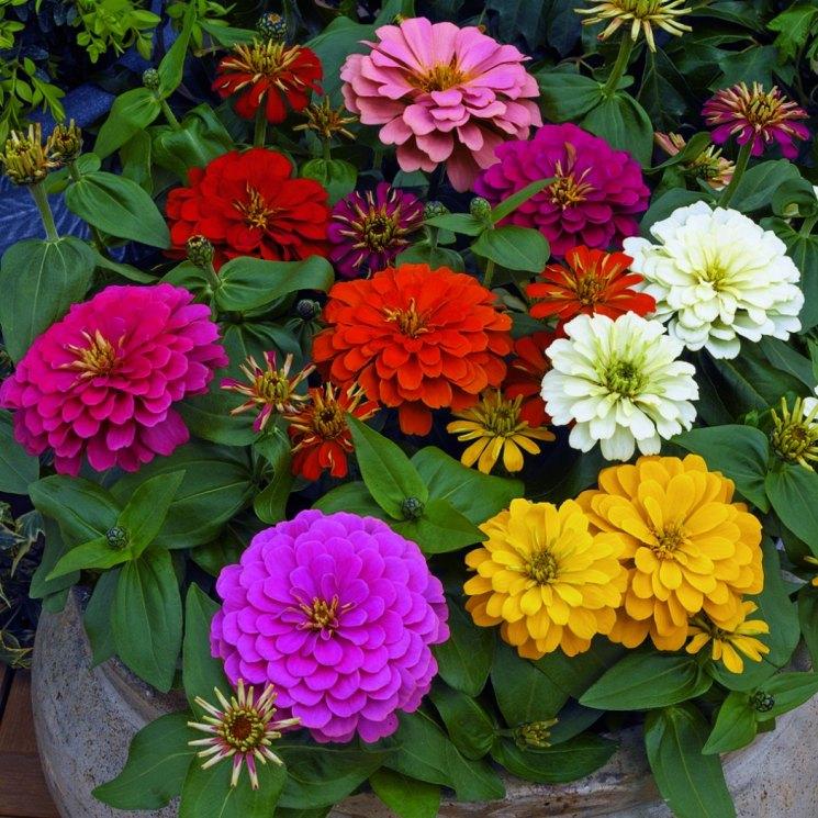 мне цветы панычи фото больше