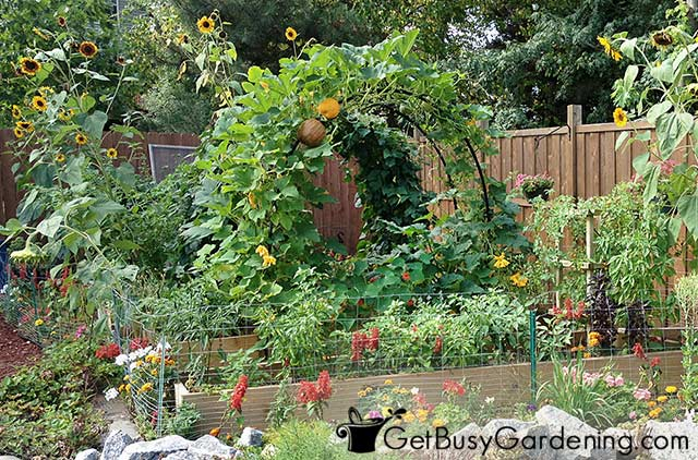 My 2013 veggie garden full grown